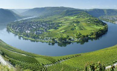 Mosel, Wein & Sonnenschein