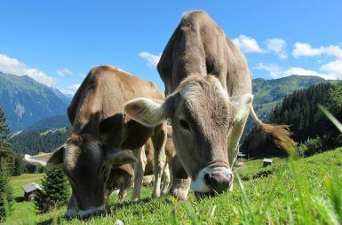 Bayern, Chiemsee und Tirol