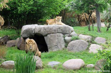 Erleben Sie den Zoo Leipzig - Top Angebot mit Übernachtung im 4-Sterne Atlanta Hotel